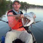 Spoonbill Catfish