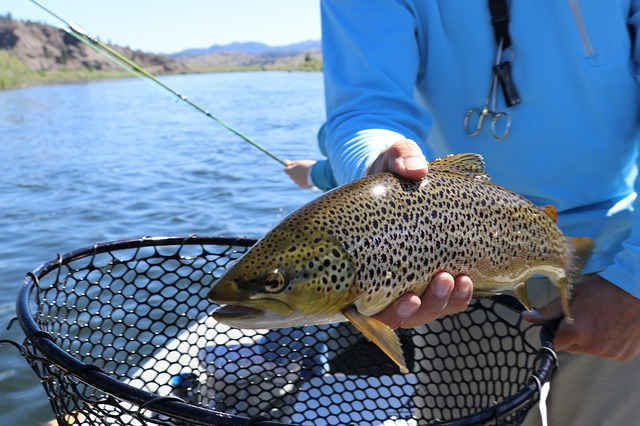 trout-fish-2650625_640