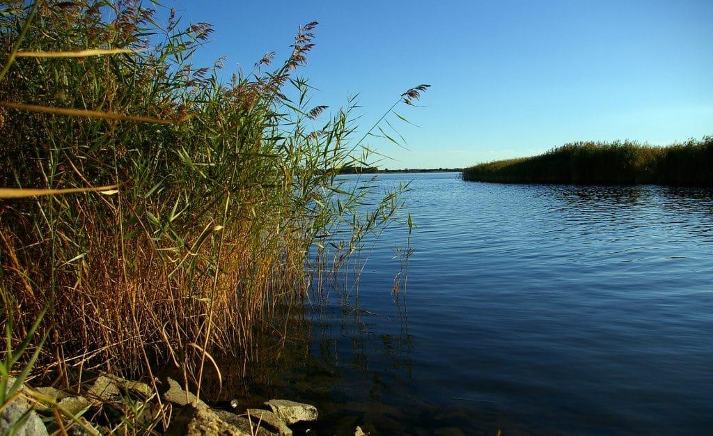 Catfish Rigs for Bank Fishing