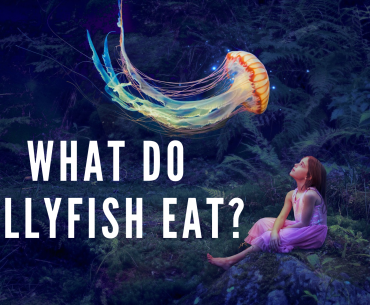 What Do Jellyfish Eat?